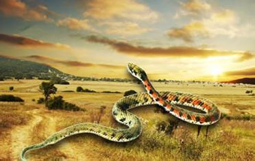 孕妇梦见蛇缠身  孕妇梦见蛇缠身是吉兆,预示会生男孩;不过