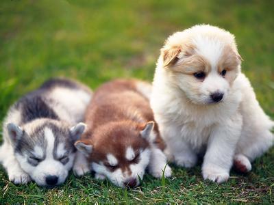 梦见狗生了10个小狗